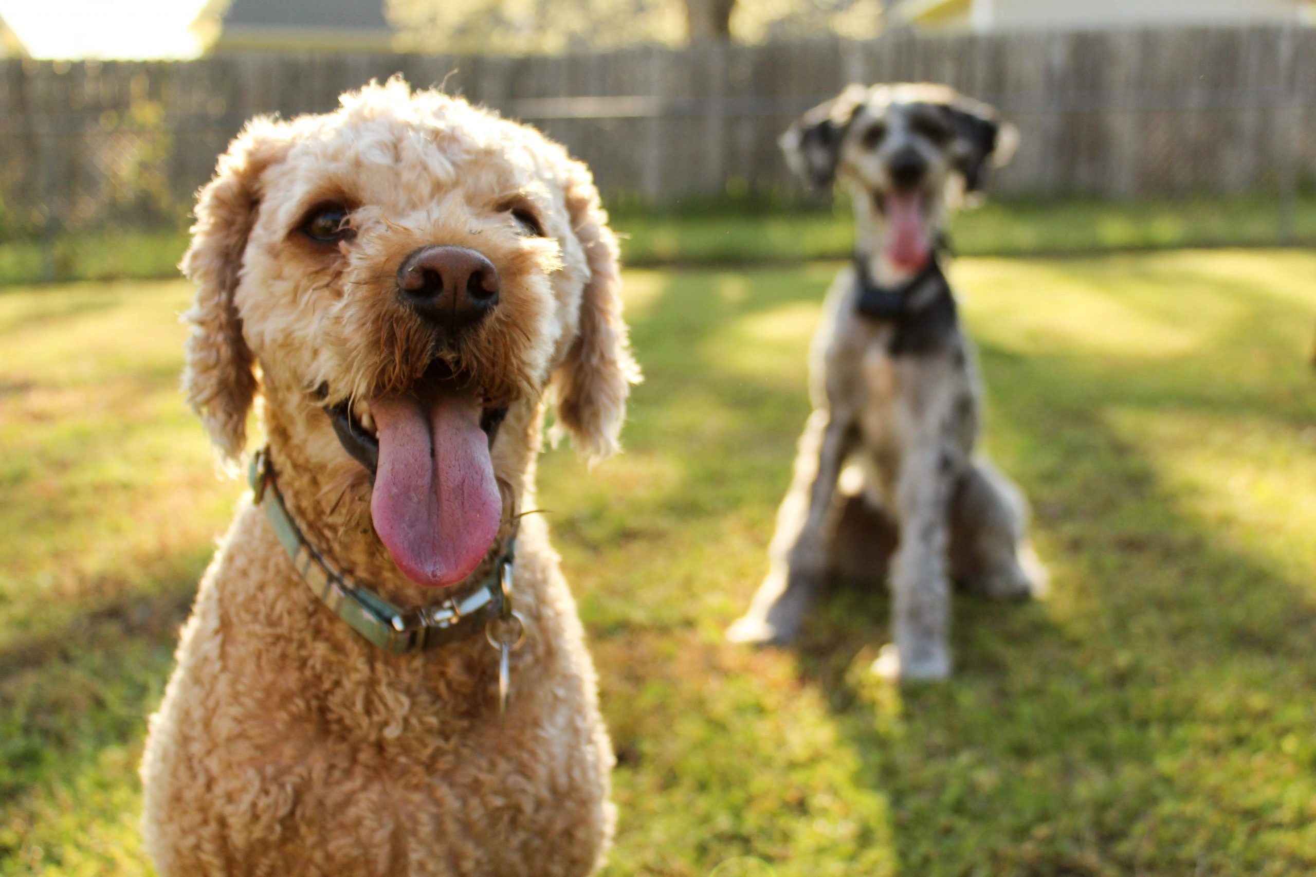 common dog health conditions and symptoms