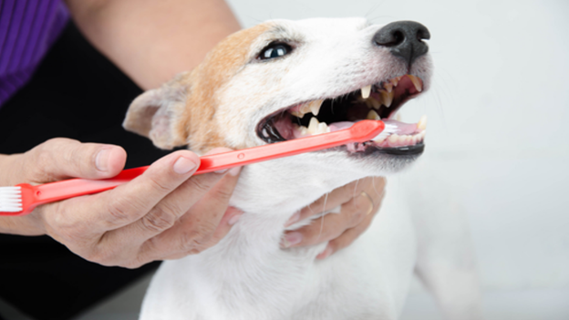 dog dental hygiene tips from animal care center of hays county in san marcos texas